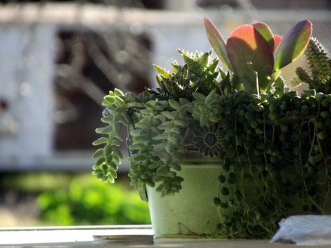 em1-potted-plant
