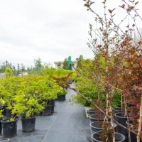 green earth nursery-4277