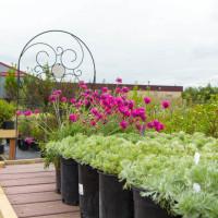 green earth nursery-4296