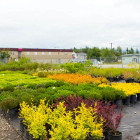 green earth nursery-4298