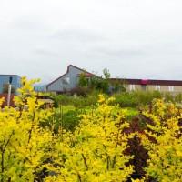 green earth nursery-4303