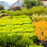 green earth nursery-4345