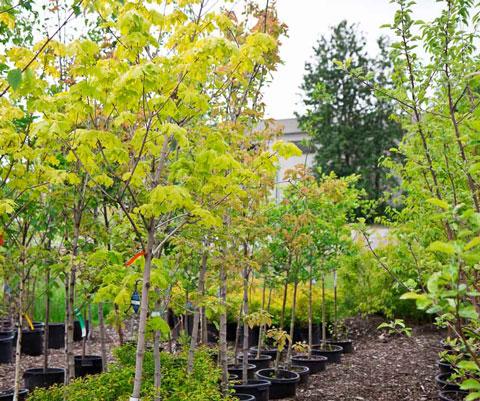 green-earth-nursery-4458