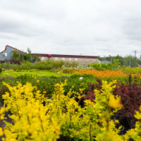 green earth nursery-4467