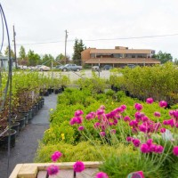 green earth nursery-4490