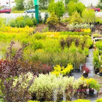 green earth nursery-4551