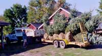 landscaping-constuction4