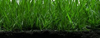 soil-treatment